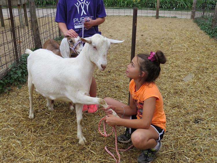animal farms for kids - petting farm