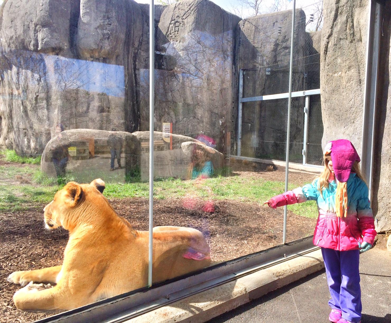 kid fun in indianapolis - Indianapolis Zoo