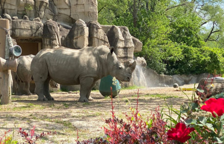 Detroit Zoo Trip Planner: Fantastic Things to Do on Your Visit