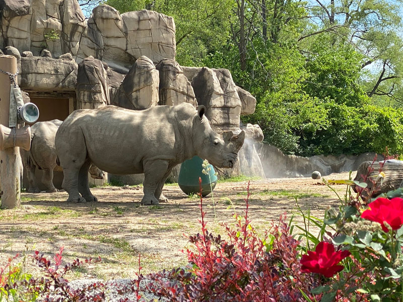 Detroit Zoo Rhino and flowers hunt