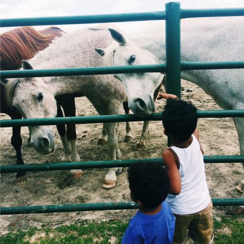 Lansing Horses