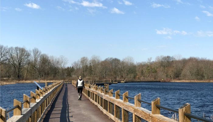 Pickerel Lake Park boardwalk feature image