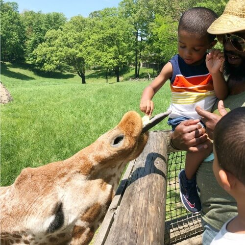 Feeding Giraffes at Twiga Binder Park Zoo 1