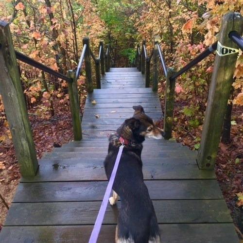 Dog Kirk Park Fall