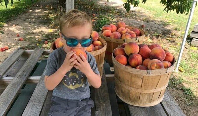 Fennville Cranes Orchard peaches 1