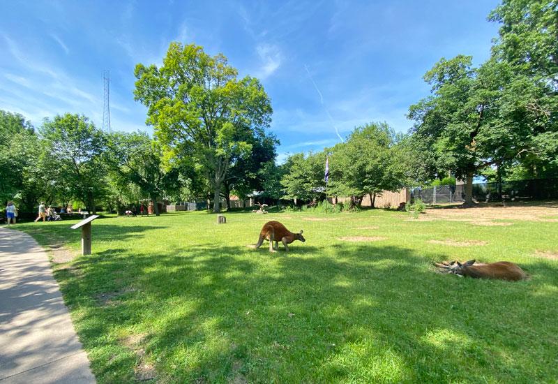 Wallaby path at the Detroit Zoo