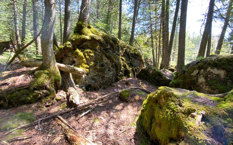 Narnia Trail Les Cheneaux Cedarville Hunt