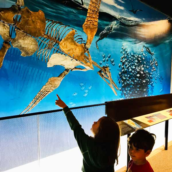 Kids at UM Museum of Natural History is part of free museums near me