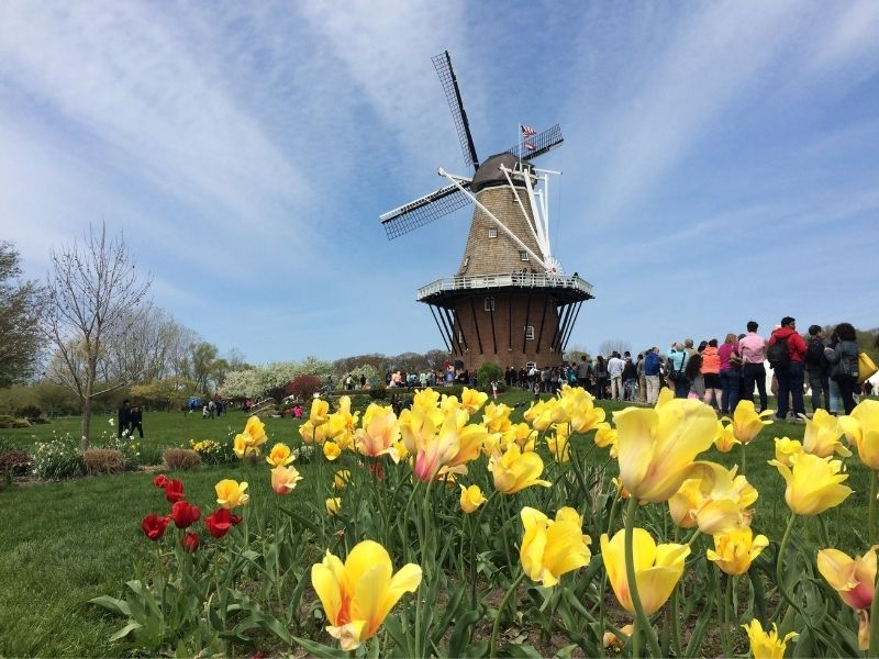 WINDMILL ISLAND GARDENS during Tulip Time in Holland MI