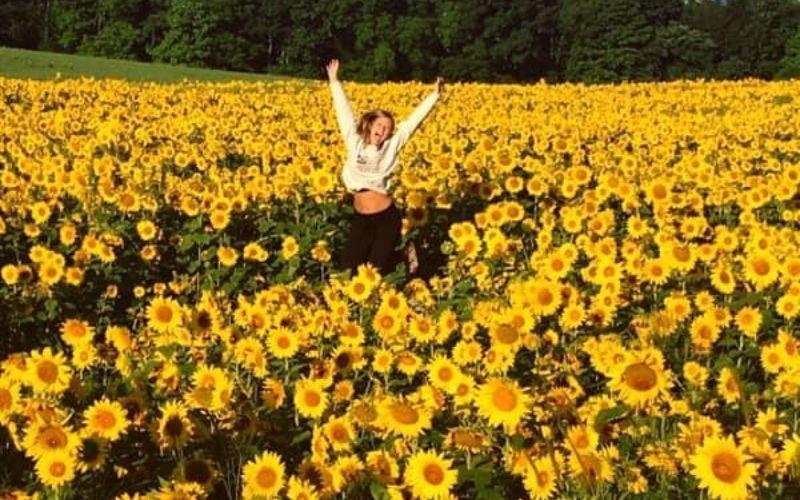 gorby sunflower fields allegan michigan