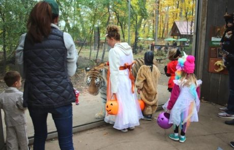 john ball zoo goes boo
