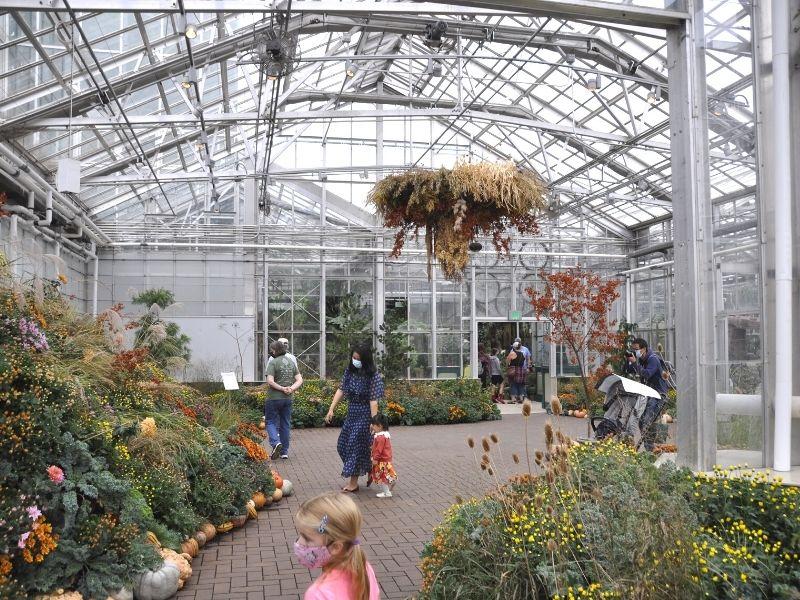 frederik meijer gardens in fall mums
