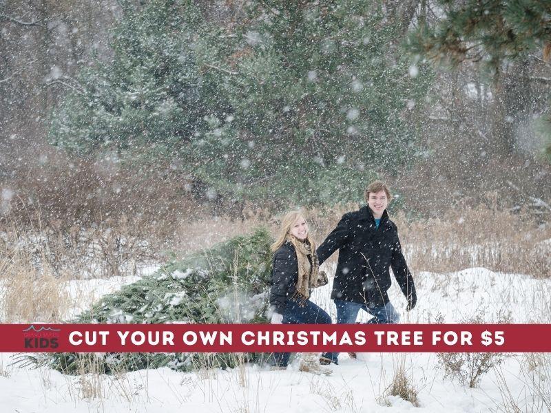 cut free christmas tree in michigan