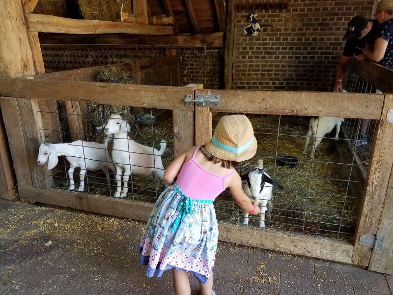 Dutch Village girl feeding goats