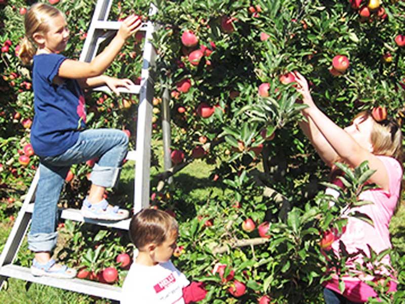 cotant's apple picking