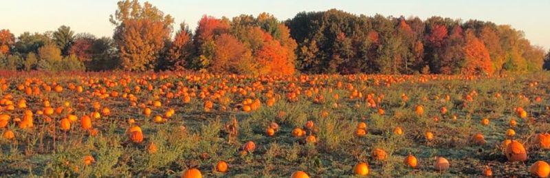 Uncle Johns Cider Mill pumpkin patch