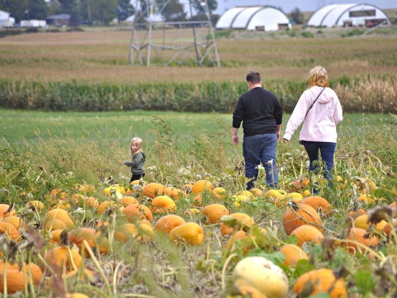 Fruit Ridge Hayrides pumpkin patch